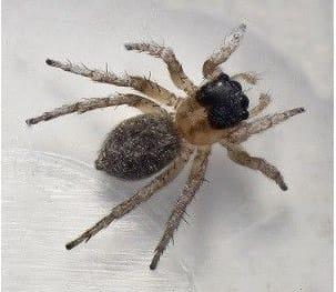 Desde el inicio de los tiempos, ¡Las arañas!