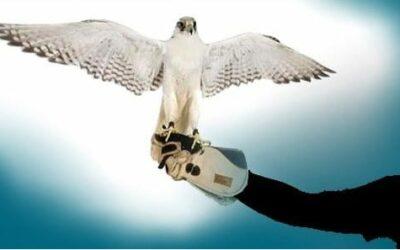 Diferentes métodos de control de plagas de palomas