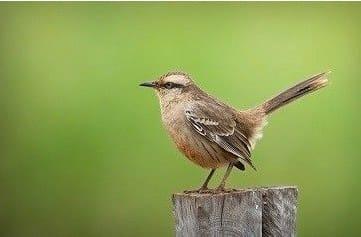 Las aves: eficaces pesticidas naturales