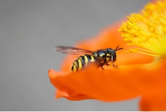 Las avispas se hacen patentes con la llegada de la primavera