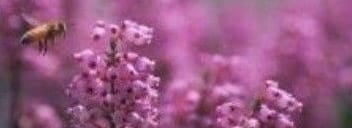 La contaminación dificulta a los insectos la localización de las flores