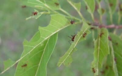 Control de plagas de hormigas en las comunidades de vecinos