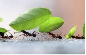 Nuevo gel insecticida para el control de hormigas