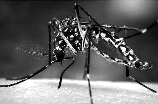 La fiebre chikungunya, un peligro en expansión
