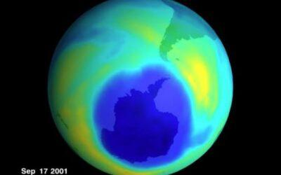 Desarrollan un proceso basado en ozono para eliminar plagas en grano almacenado