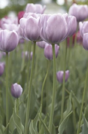 La temporada de fumigación de jardines de Madrid empieza en marzo