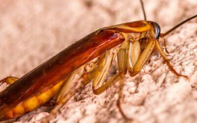 Fumigación de cucarachas: ¡ponles fin para siempre!