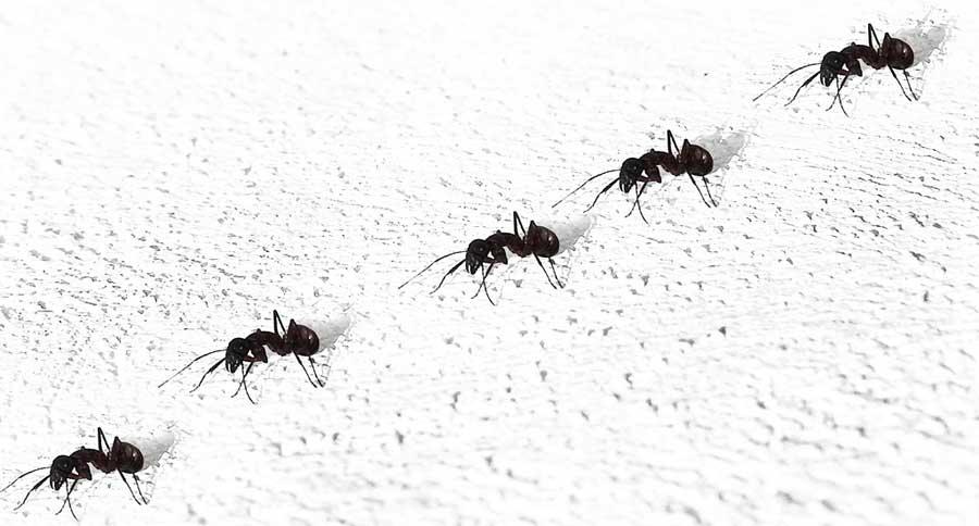 Consejos para el control de plagas de hormigas Madrid en primavera