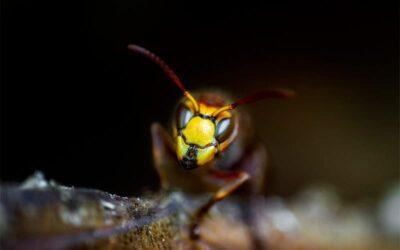 Desinsectación Madrid: ¿Desaparecen las plagas de insectos en invierno?