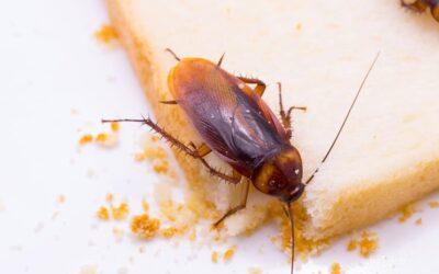 Eliminación de cucarachas Madrid: ¿Sabes qué enfermedades pueden transmitir?