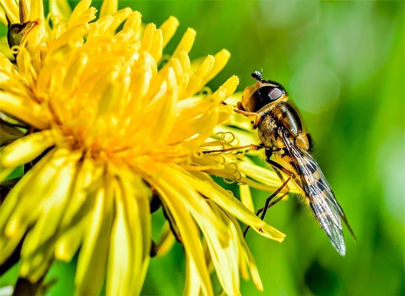 Fumigación de avispas Madrid: ¿Cuáles son las diferencias entre abejas y avispas?