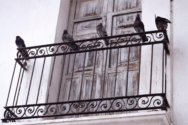 Control de plagas de palomas Madrid: cómo evitar que se posen las palomas