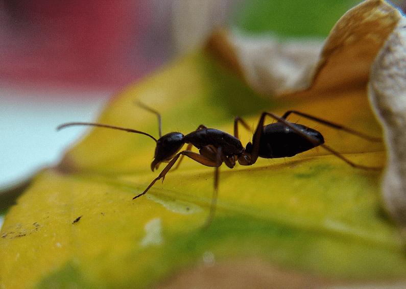Control de hormigas Madrid: cómo prevenirlas