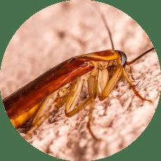 Foto plagas de cucarachas en casa