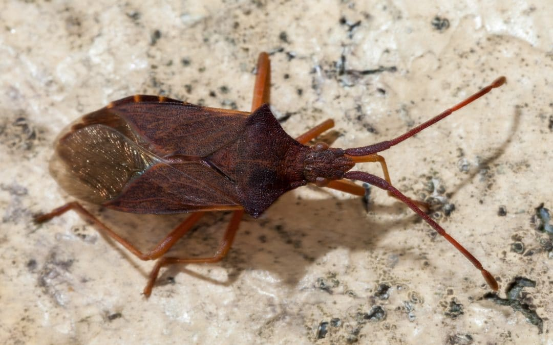 Control de plagas de chinches en invierno: ¿cómo prevenirlas?