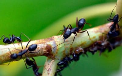 Métodos para un eficaz control de plagas de hormigas en Madrid