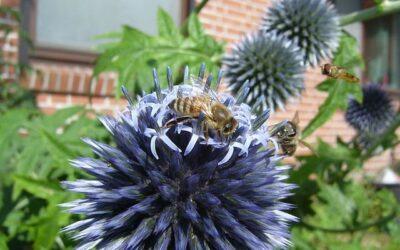 Desinsectación Madrid: ¿cuáles son las plagas de insectos más comunes en primavera?