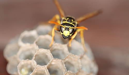 Las plagas más habituales del verano: control de cucarachas, avispas, hormigas o ratas