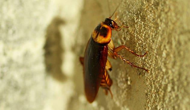 Control de plagas de cucarachas: ¡que no te invadan con el calor!