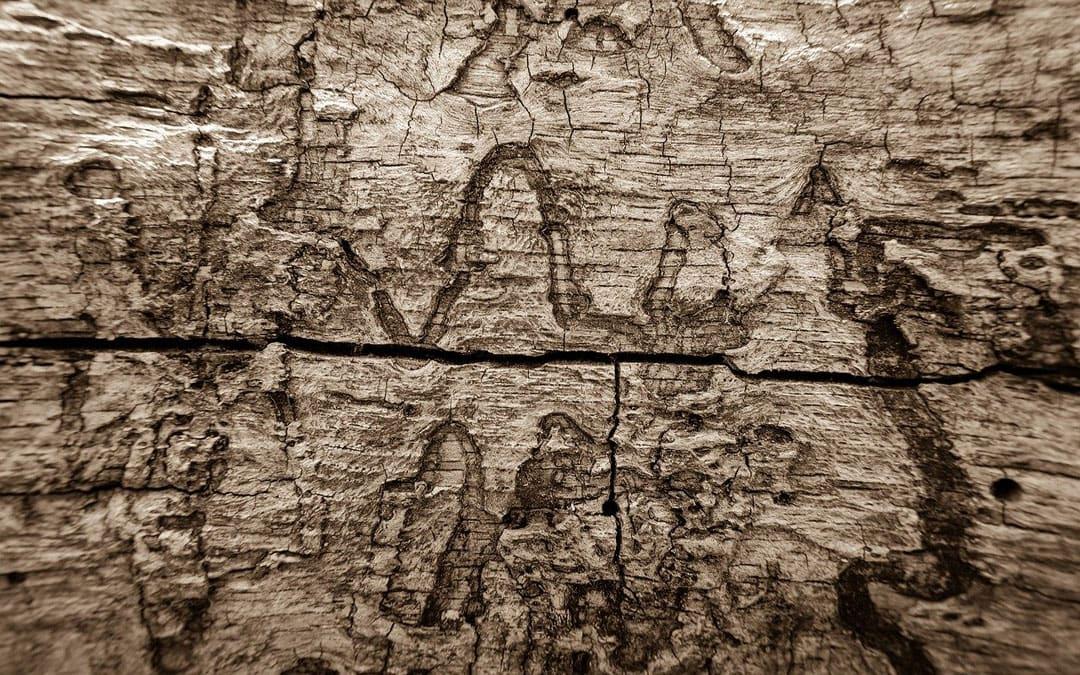 Cebos Sentritech: perfectos para realizar un acurado control de termitas