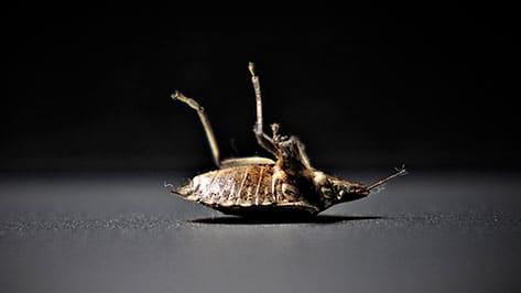 En invierno las plagas no desaparecen ¡descubre cuáles son las más comunes!