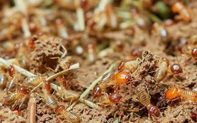 Las mejores soluciones para eliminar plagas de termitas
