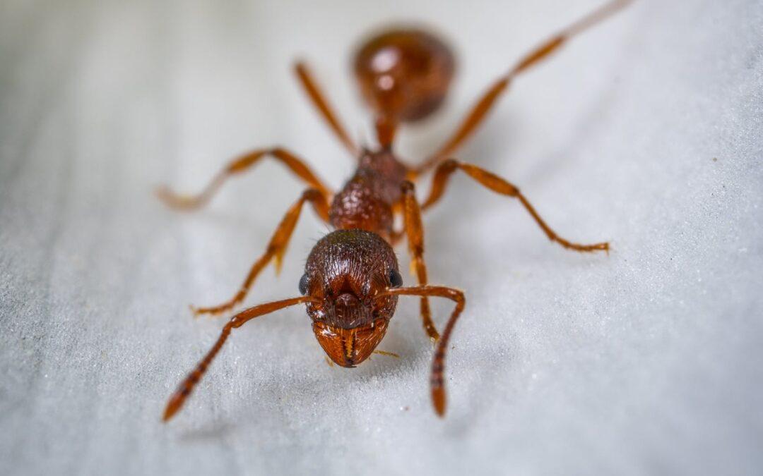 Plagas de hormigas: ¿en qué rincones de casa pueden esconderse?