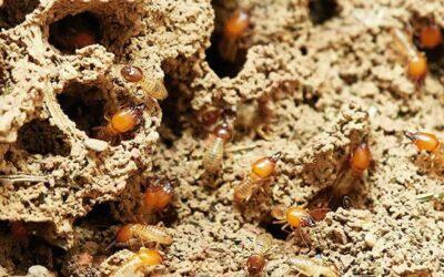 6 pruebas para saber si tienes termitas