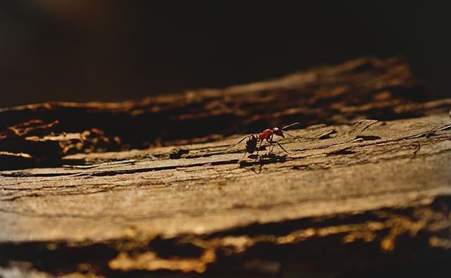 ¿Por qué salen hormigas en casa? Descúbrelo todo acerca de su comportamiento
